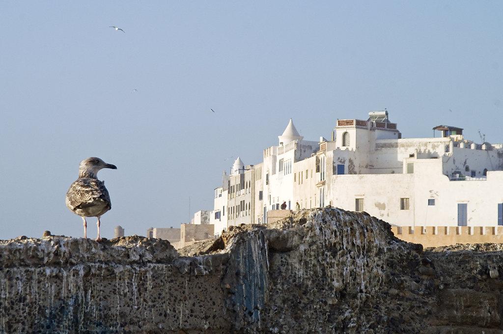 Essaouira-0177.jpg