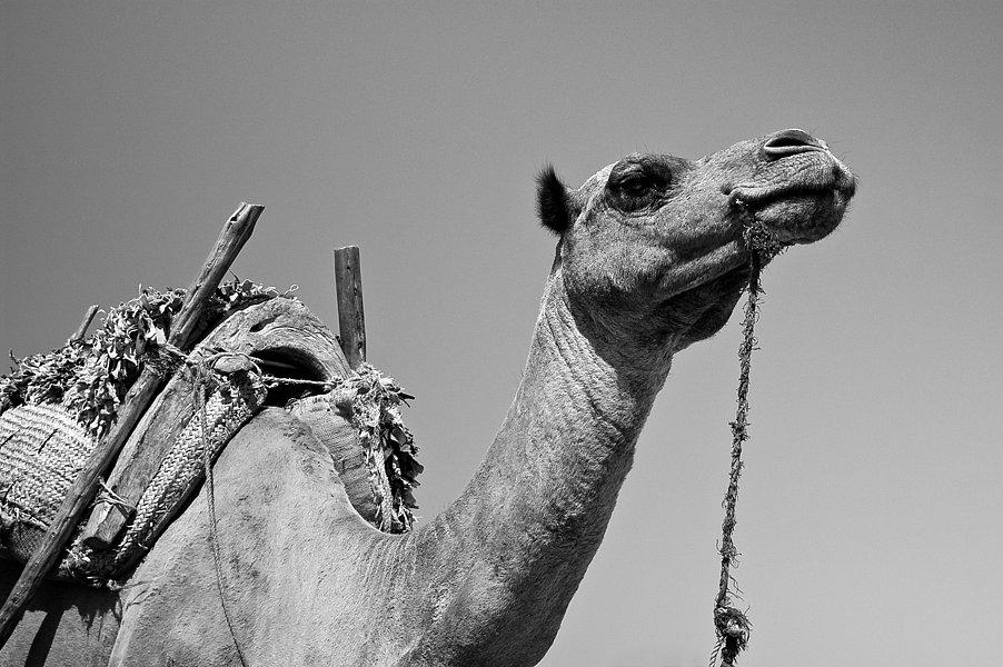 Bienvenue à Essaouira !